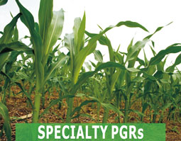 Specialty PGRs