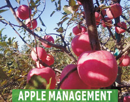 Apple Management